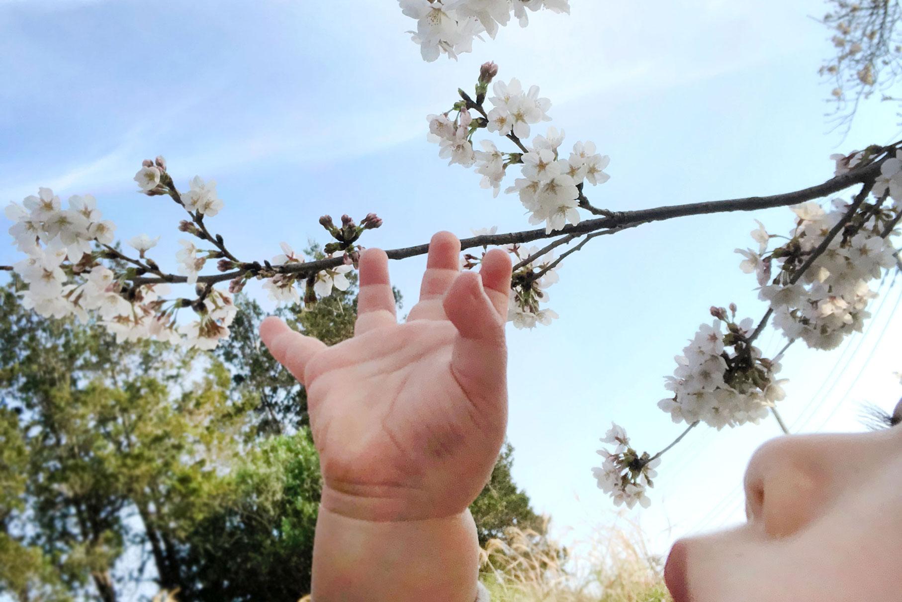 桜をみると思い出すこと